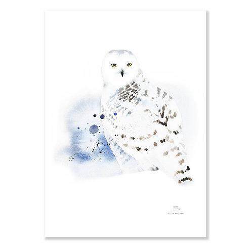 "Ester Visual SNOWY OWL print (20"" X 28"")"