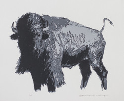 Bison (2nd State)