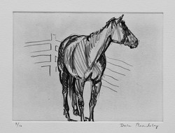 Horse Study (With Fence)