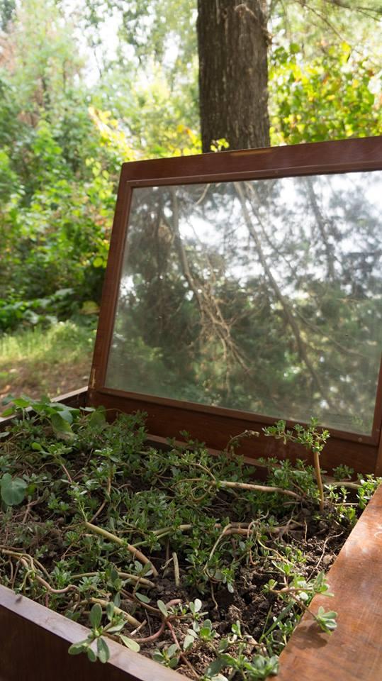 Symbiosis_Exhibition_in_Botanical_Garden (148)