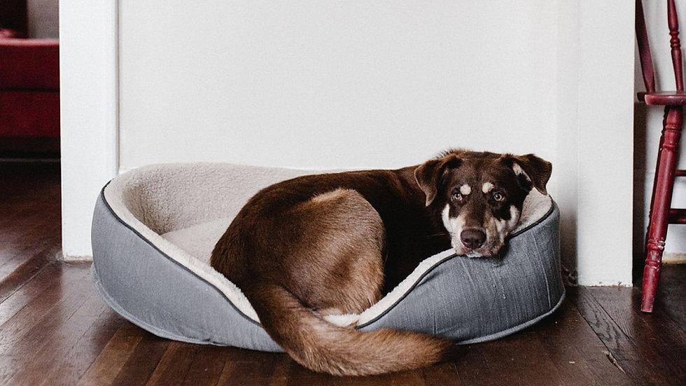 MPP_2 Senior Dog.jpg