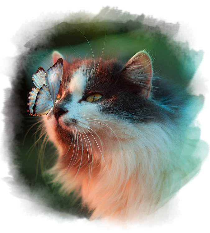 P_Cat Butterfly.png