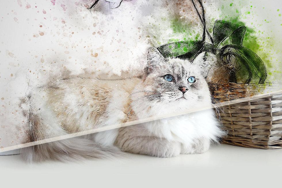 Free Trial Feeding Programme Cat.jpg