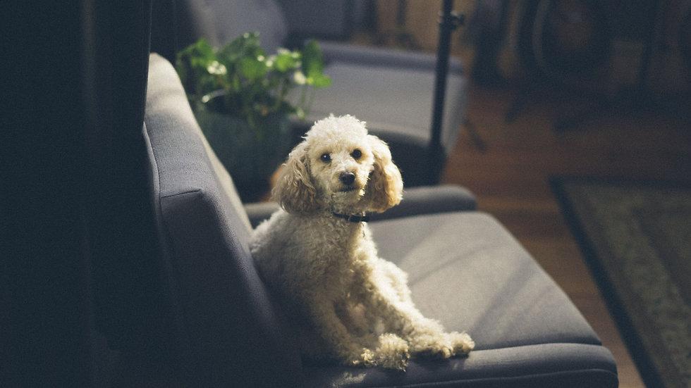MPP_1 Indoor Dog.jpg