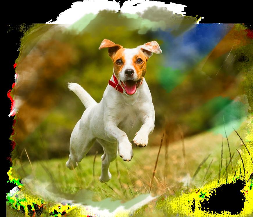 P_Dog Run.png