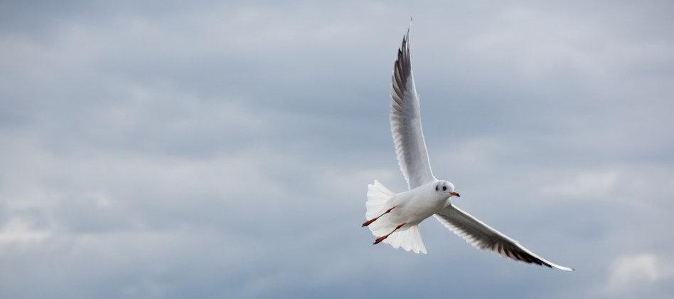photodune-5877301-seagull-in-sopot-pier-baltic-sea-s_edited.jpg