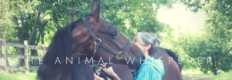the animal whisperer(1)_edited_edited