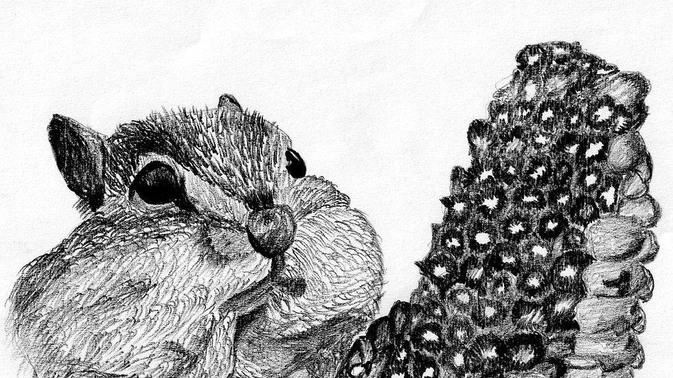 seed embed plantable greeting card ,squirrel/corn