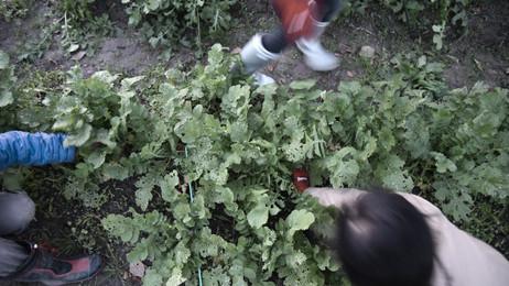 野菜生産体験