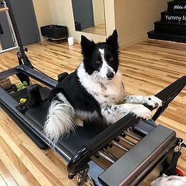 Xena preparing for Reformer knee stretch