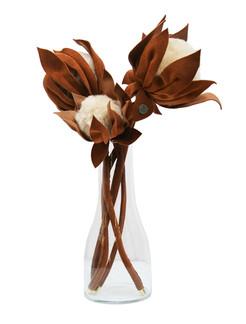 A delicadeza da Protea