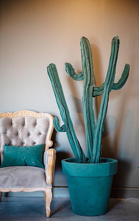 Cactus G