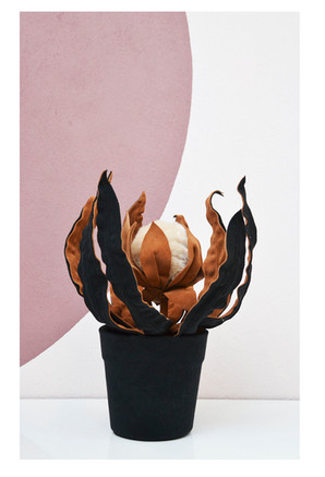 Protea de Vaso Alto
