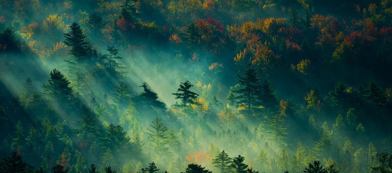 trees-2560x1440-light-green-4k-19568.jpg