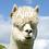 Thumbnail: ALPACA ADOPTION