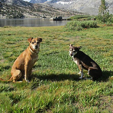Two dogs sitting in a grassy field looking at the camera with a lake and snow covered grey mountains behind them.