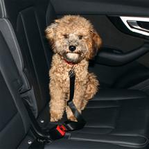 Pet Seatbelt.