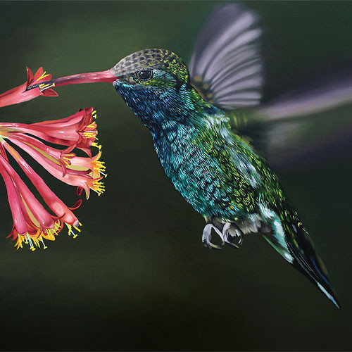 Humming Bird Painting 14x12'' print.jpg