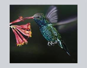 Hummingbird & Honeysuckle
