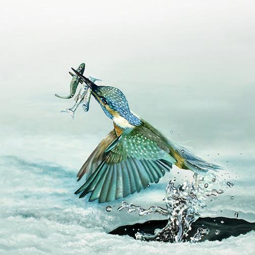 kingfisher print.jpg