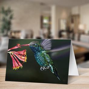 Humingbird & Honeysuckle
