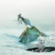 Paul Talbot, Hunting Kingfisher.jpg