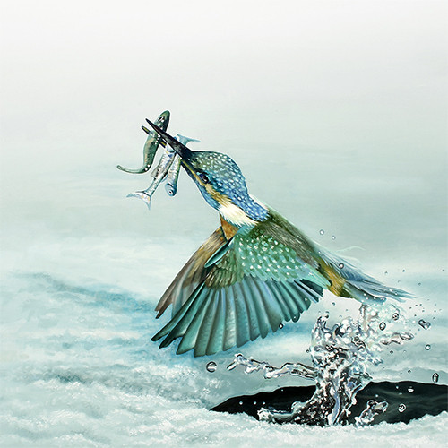 kingfisher about slideshow.jpg