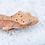 Thumbnail: Mardi Gras Super Dalmatian Crested Gecko