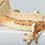 Thumbnail: Creamsicle Lilly White Crested Gecko