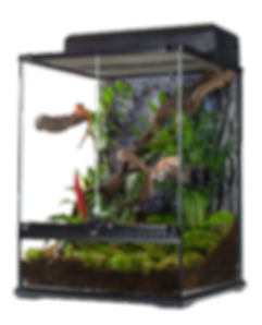 Crested Gecko Housing