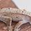 Thumbnail: Mardi Gras Dalmatian Crested Gecko