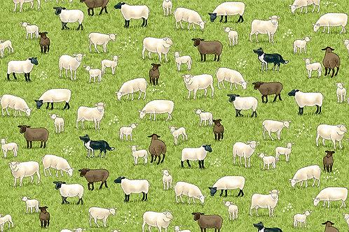 Village Life - Sheep