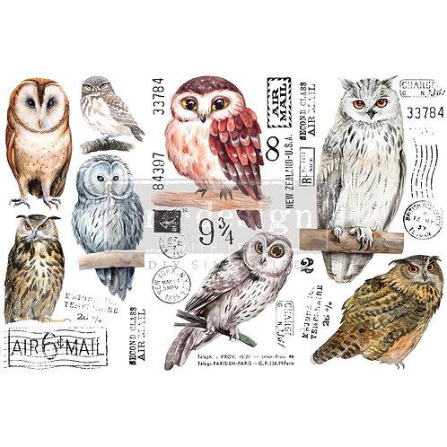 Owl-     Prima Mini Transfer