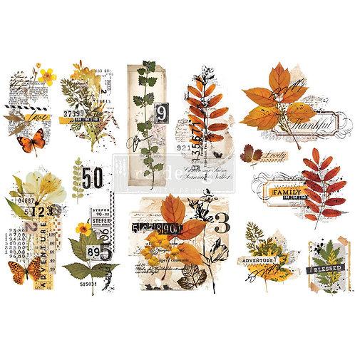 Foliage Collector-     Prima Mini Transfer
