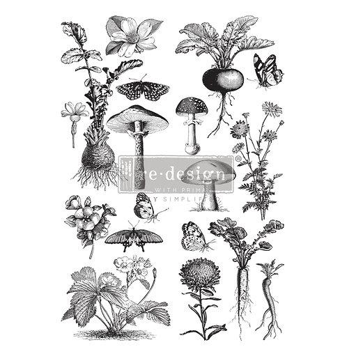 Fungi Forest   -Prima Transfer