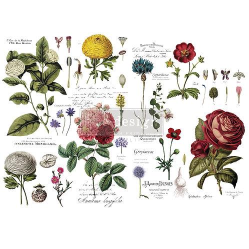 Vintage Botanical  -Prima Transfer
