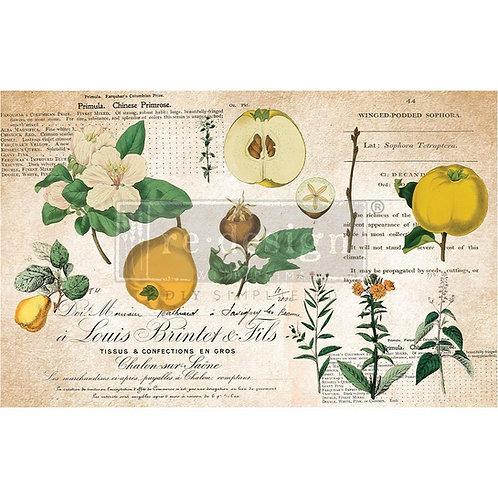 Primrose  - Prima Mulberry Paper