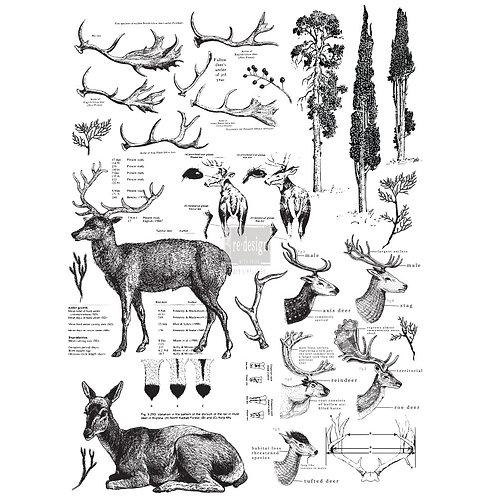 Deer   -Prima Transfer