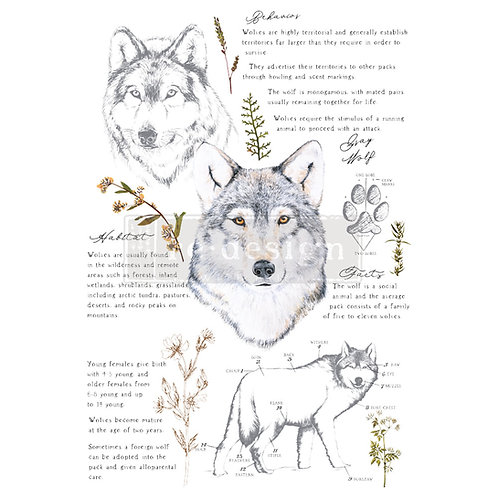 Gray Wolf - Prima Transfer