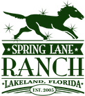 Green logo with transparent background.p
