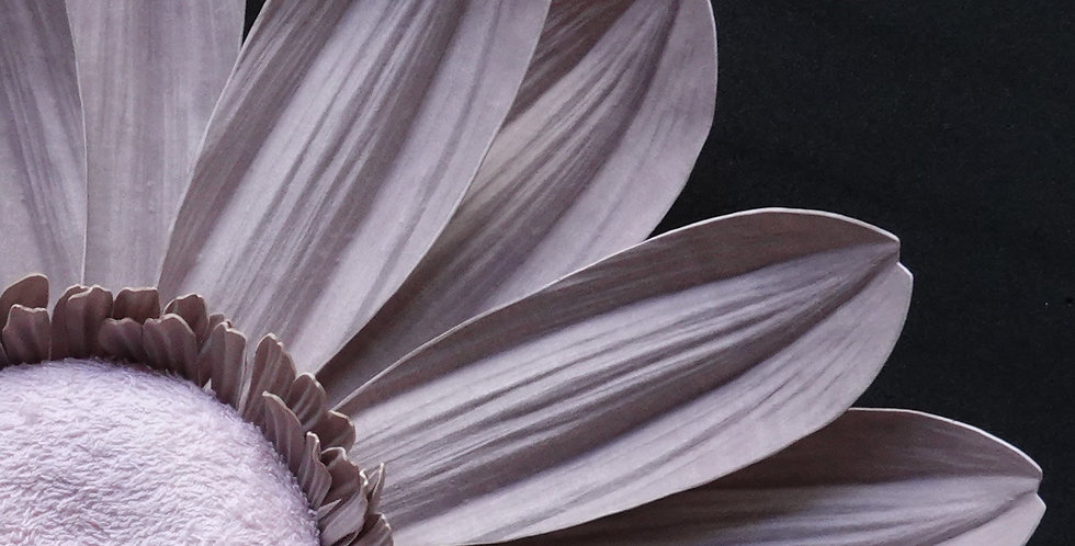 Gerbera Wall Flowers - Light Mauve