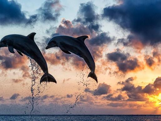 Troia Walking Tour & Dolphin Watching