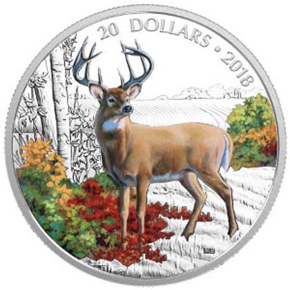 Majestic wildlife - White tailed deer