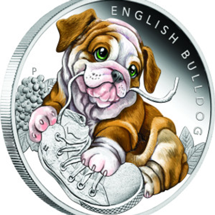 Puppies - English Bulldog