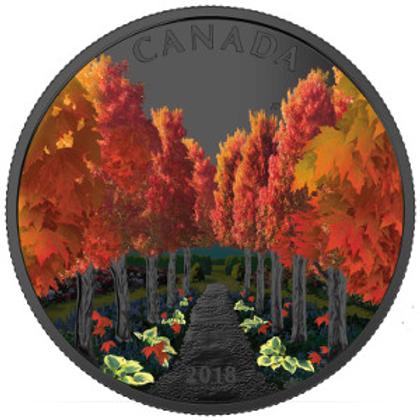 Tunnel arboré (Maple tree) - Vision nocturne