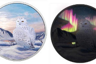 Arctic animals - Snowy owl
