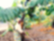 banana-project-676x507_edited.jpg
