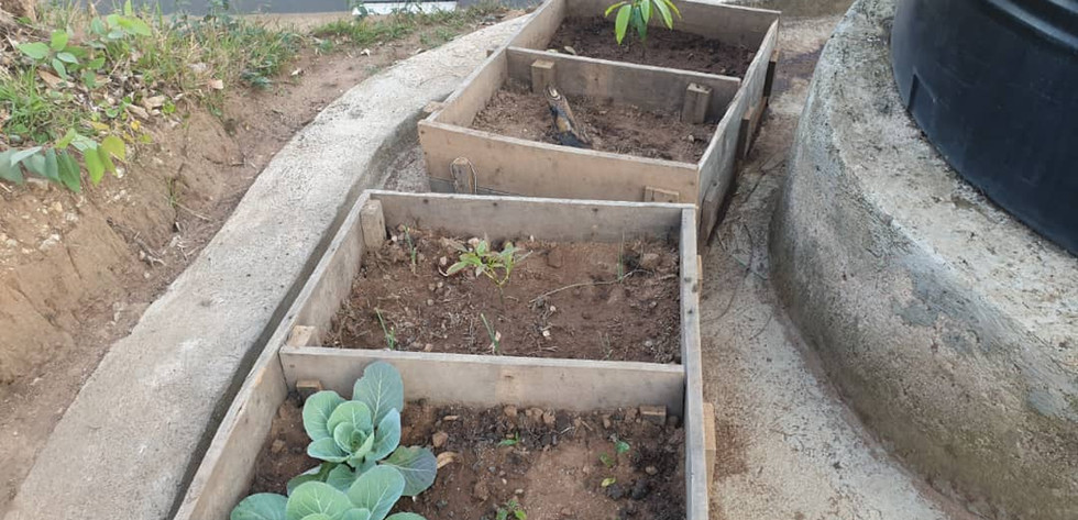 new gardens.jpeg