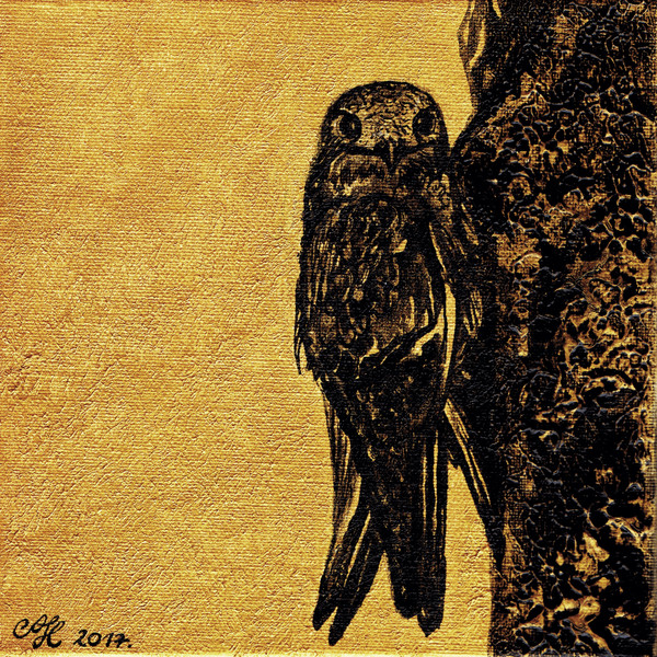 Sarlós fecske / Swift / Flink