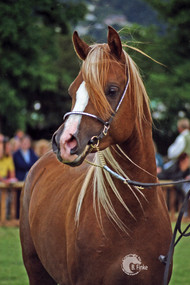 Star of the Seasons 1995